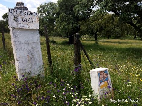 Cruce con el Camino de Santiago